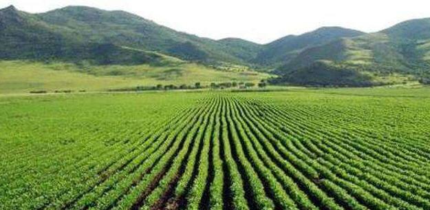 到2022年,济南将建成500万亩以上高标准农田
