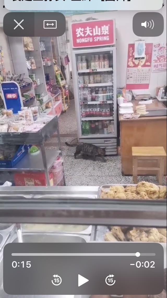 章丘这家医院的食堂里竟然养猫!卫生吗?