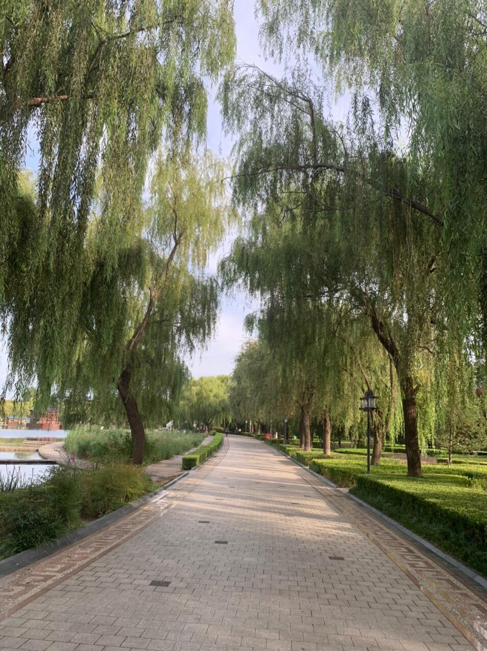 百脉泉公园秋景